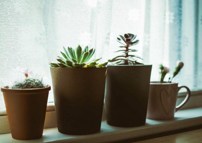 3x waarom kamerplanten onmisbaar zijn in huis